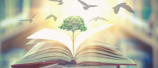 Importance des études en environnement
